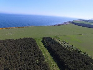 Property for Auction in Scotland - Tarrel Farm Woodland Site, Tain, IV20 1SL