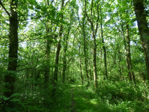 Property for Auction in Dorset - Lot B Land at Boys Hill Drove, Sherborne, Dorset, DT9 5PJ